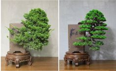 Before and After cascading juniper