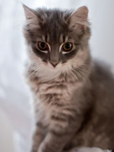 It's crazy how much this looks like my cat Ellie! The markings around the eyes are literally identical...