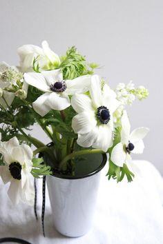 Black and White Anemones.