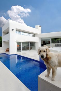 Fancy And Cool Swimming Pool Designs for Your Home: Fascinating Modern Outdoor White Blue Swimming Pool Design Feats Fantastic Blue Swimming Pool Design At The Yard Of Contemporary White House And Exterior Designs ~ workdon.com Swimming Pool Inspiration