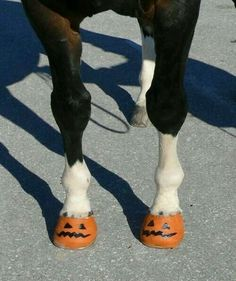 Haloowen horse :3