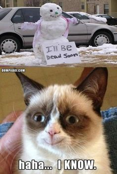 grumpy-cat-christmas-snow-man-melting-what-makes-grumpy-cat-happy, funny christmas pictures - Dump A Day Grumpy Cat Quotes, Funny Grumpy Cat Memes, Cat Jokes, Funny Cats, Funny Memes, Memes Humor, Funny Horses, Hilarious Jokes, Funny Minion