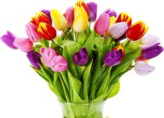Send a bouquet of flowers to somebody just to make their day