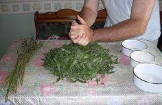 Как сушить Иван-чай