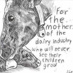 Vegan Facts, Vegan Memes, Vegan Quotes, Stop Animal Testing, Stop Animal Cruelty, Reasons To Be Vegan, Abuse Quotes, Amor Animal, Why Vegan