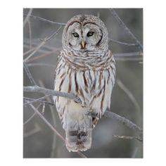 Snowy Owl Poster 50% off #zazzle animal #leatherwooddesign leatherwooddesign.com