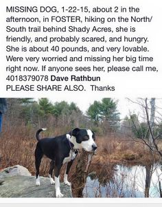 1000+ images about Lost Dogs RI on Pinterest | Lost pets ...