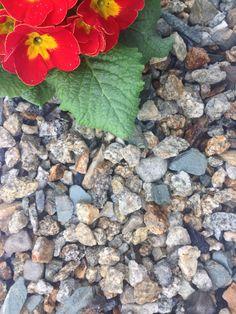 An Irish Yellow Granite with Blue Limestone mixed through it. Decorative Gravel, Flower Beds, Granite, Yellow, Blue, Irish, Design Ideas, Landscape, Fruit