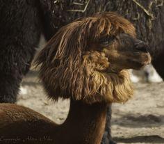 dierentuin Nordhorn de mooierd