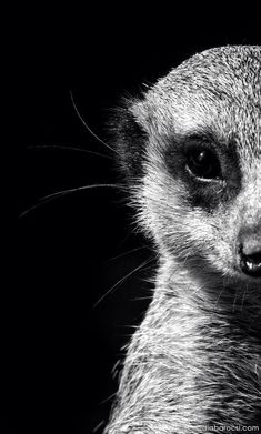 Black & White ✿ Animals ✿ #Photography