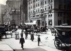 The Belmont Coach, 1905, four horses.  New York Architecture Images- black and white new york
