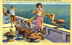 Feeding the Pelicans at the Municipal Pier