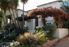 Vitis californica 'Rogers Red' - Rogers Red California Grape | Flickr - Photo Sharing!
