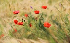 Summer by Ana Pana on 500px