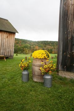 Brilliant yellow flowers and cattails placed in milk cans and an antique barrel make for colorful decorations at a fall country wedding at the Historic Barns of Nipmoose. Andrea Casey Photography