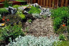 Drought Tolerant Garden: Water Harvesting Tips. birdsandblooms.com