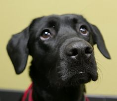 Koda is available for adoption. Call us at (858) 676-1600!