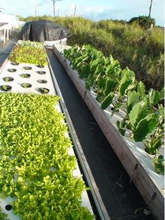 Low Density Family Aquaponics System uses a fifth the energy of a typical system