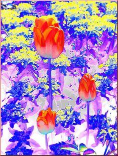 'Tulpen bunt' von Rudolf Büttner bei artflakes.com als Poster oder Kunstdruck $18.02