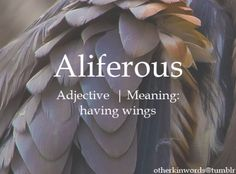 Aliferousadjective | Meaning: having wings.