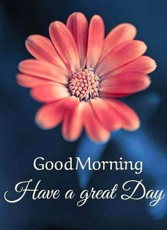 Good Morning Images For Whatsapp Good Morning Flowers Pictures, Good Morning Sunday Images, Good Morning Beautiful Flowers, Good Morning Nature, Good Morning Happy Sunday, Good Morning Roses, Good Morning Cards, Good Morning Messages, Good Morning Greetings