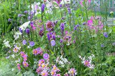 Einmal pink reicht dir nicht? Dann färbe deinen ganzen Garten damit ein - es lohnt sich.