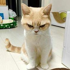 (@icmcm) в Instagram: «#cats #cat #instacat #pets #pets #instapet #instapets»