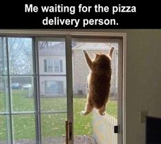 Must See Those FUNNY MEMES OF THE WEEK 65 PICS Click The Picture Funny Animal Jokes, Funny Cat Memes, Animal Memes, Funny Cats, Funny Animals, Crazy Cat Lady, Crazy Cats, Kinds Of Cats, Cat Quotes