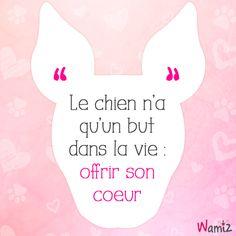 Le chien n'a qu'un but dans la vie : offrir son coeur ------ A dog has one goal in life : to offer his heart