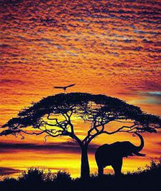 I like how the bird, tree and elephant are black and the sunset is such a nice mixture of orange and yellows http://exploretraveler.com http://exploretraveler.net