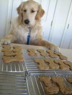 easy doggie bones (only 4 ingredients)  2 cups wholewheat flour  1 Tablespoon baking powder  1 cup natural peanut butter  1 cup lowfat milk