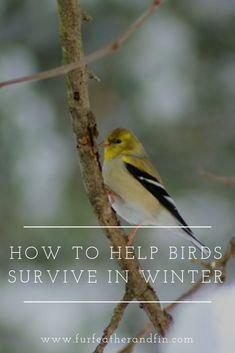 How to Help Birds Survive in Winter British Wildlife, Bird Watching, Animals Beautiful, Mother Nature, Enchanted, Woodland, Survival, Birds, Education