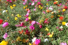 Check out our long edible flowers list and ideas for how to use them in things like cakes, salads, vinegars and more.