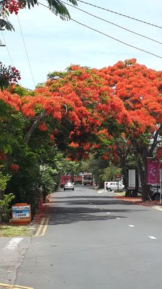 Beauiful Flamboyant Tree.... Grand Baie Mauritius