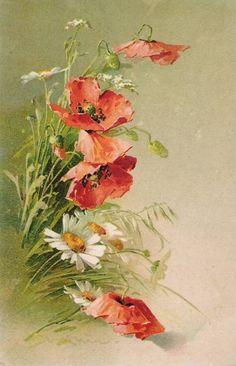 Catherine Klein - Poppies 2