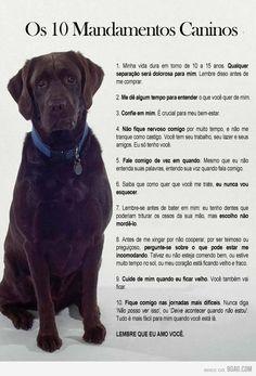 Resultado de imagem para coisais importante sobre animais de estimação