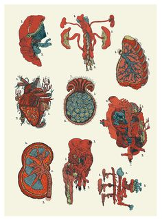 Vital organs chart - Llew Mejia