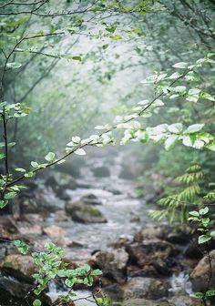 A beautiful creek/stream.