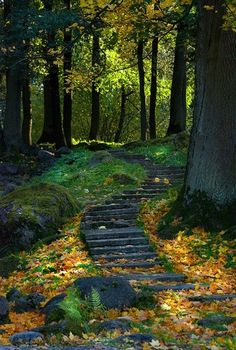Stairsteps in a forest are a secret pleasure