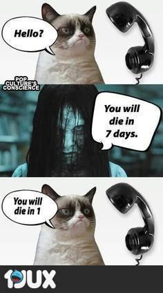Top 18 Best Grumpy Cat Memes Can anything brighten a day quite like a funny cat? These hilarious cat memes are guaranteed to make you crack a smile. Hope you enjoy them and don't forget to share to your friends! Grumpy Cat Quotes, Funny Grumpy Cat Memes, Funny Animal Jokes, Cat Jokes, Cute Funny Animals, Funny Cat Quotes, Animal Humor, Animal Quotes, Grump Cat