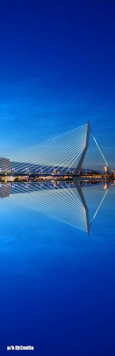 Erasmusbrug Rotterdam - The Netherlands