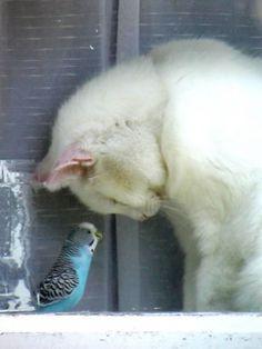 インコに頭を下げる猫