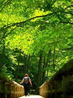 Oirase day-walk, Aomori-ken 2013