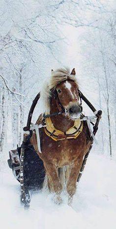 Sleigh ride in the snow-on my bucket list
