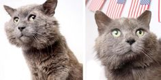 A 9-year-old rescue cat let out the loudest purr they'd ever heard when he felt loved, getting chin scratches at the shelter.Meet Gandalf the cat! Young Williams Animal CenterGandalf was almost a decade old when he came to Young Williams Animal Center, a rescue group in Knoxville, T...