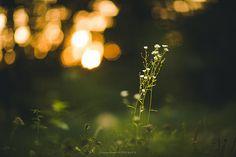 sunset in the woods | Sandra Schmid | Flickr