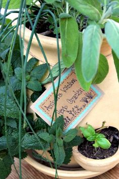 13 Tips for Planting an Herb Garden     http://smallgardenideas.net/13-tips-for-planting-an-herb-garden/