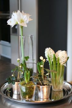 Beautiful forced white bulbs for the holidays