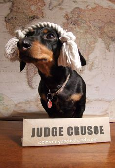 Crusoe to judge a Halloween Costume Contest in #Ottawa #dachshund http://www.celebritydachshund.com/2013/10/24/dachshund-halloween-costumes-contest/