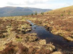 Bog / Glendalough